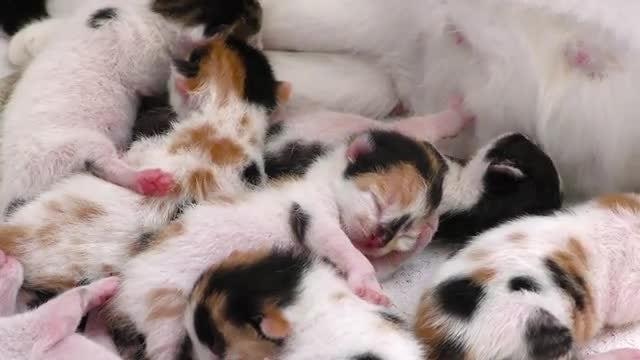 Beautiful Newborn Kittens Sleeping : Stock Video