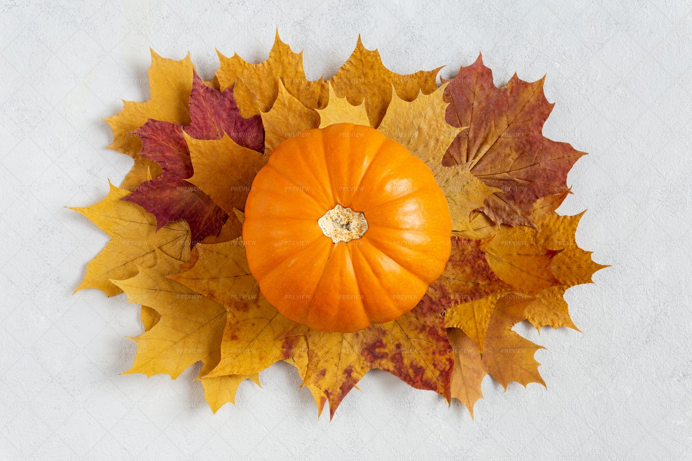 Pumpkin With Fall Background: Stock Photos