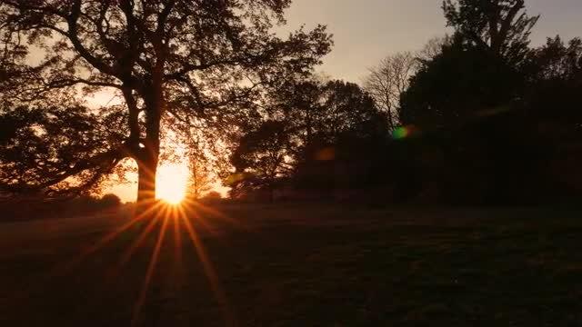 Sunset Peeking Behind Oak Tree: Stock Video