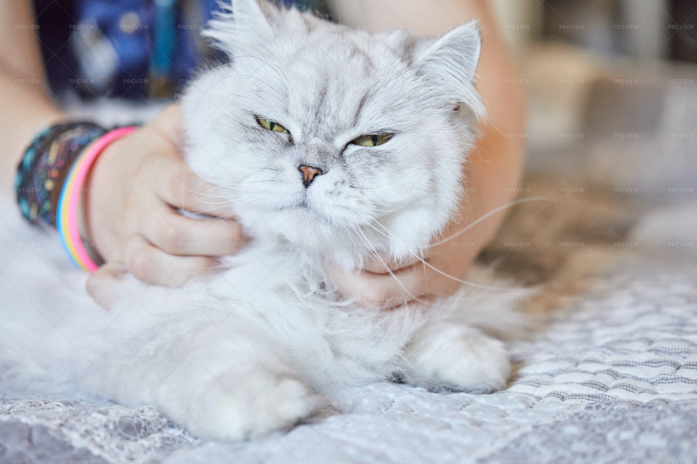 Girl Scratches The Neck Of Cat: Stock Photos