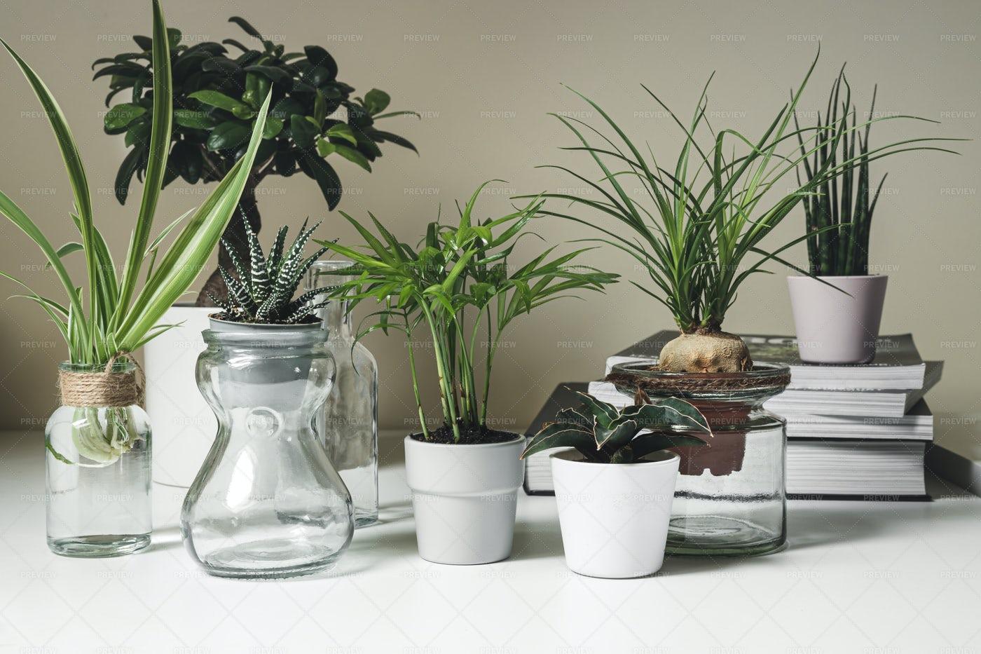 Mini Plants In Pots: Stock Photos