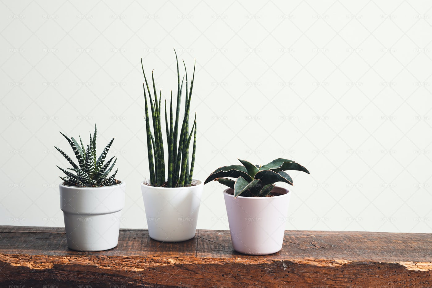 Home Plants In Pots: Stock Photos