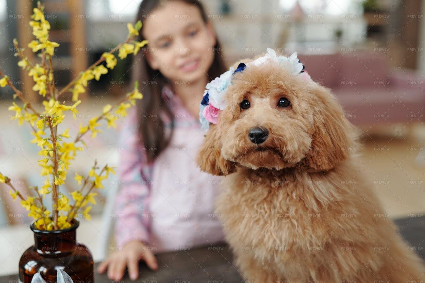 Cute Dog At Home: Stock Photos