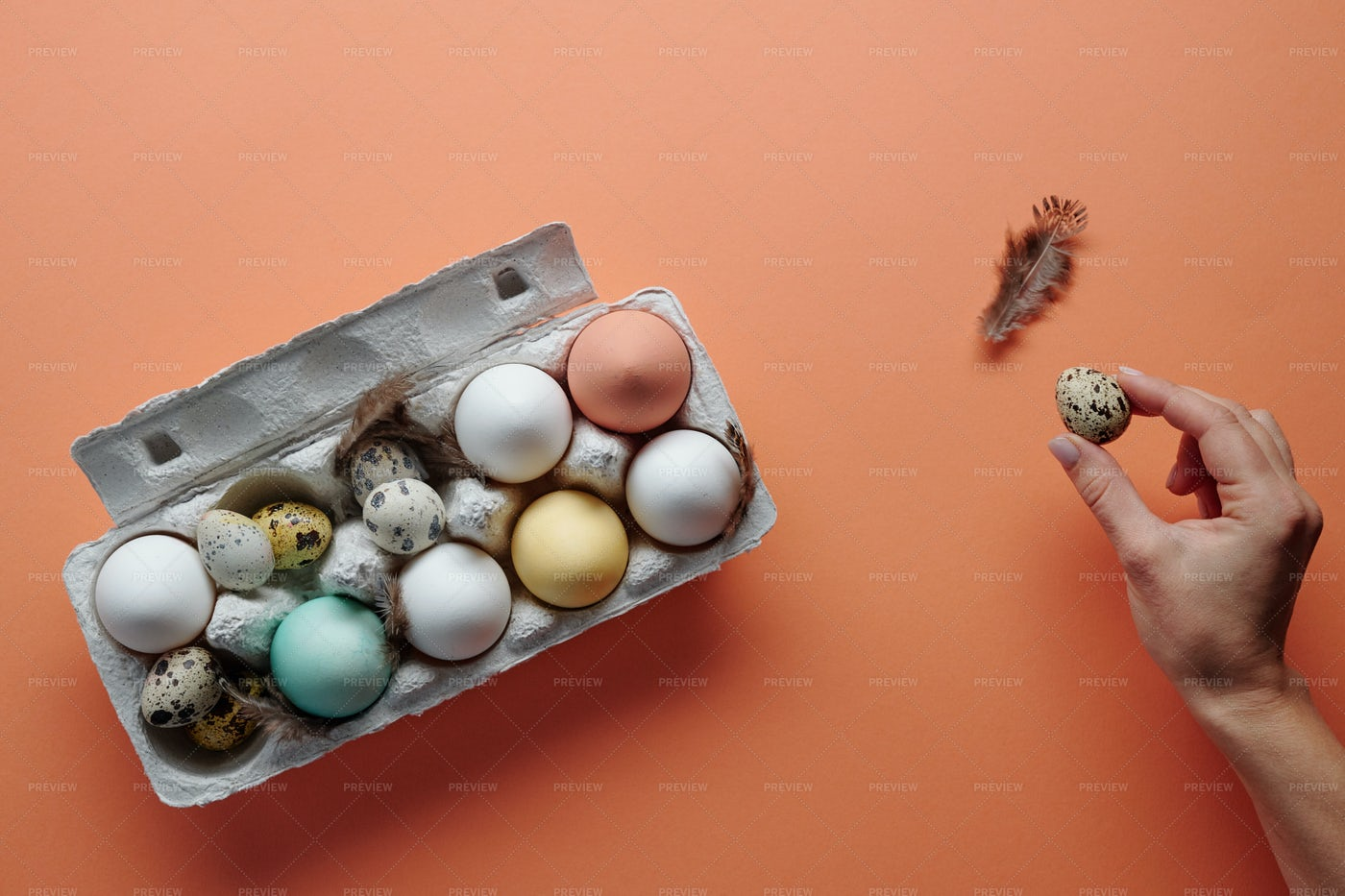 Chicken And Quail Eggs: Stock Photos