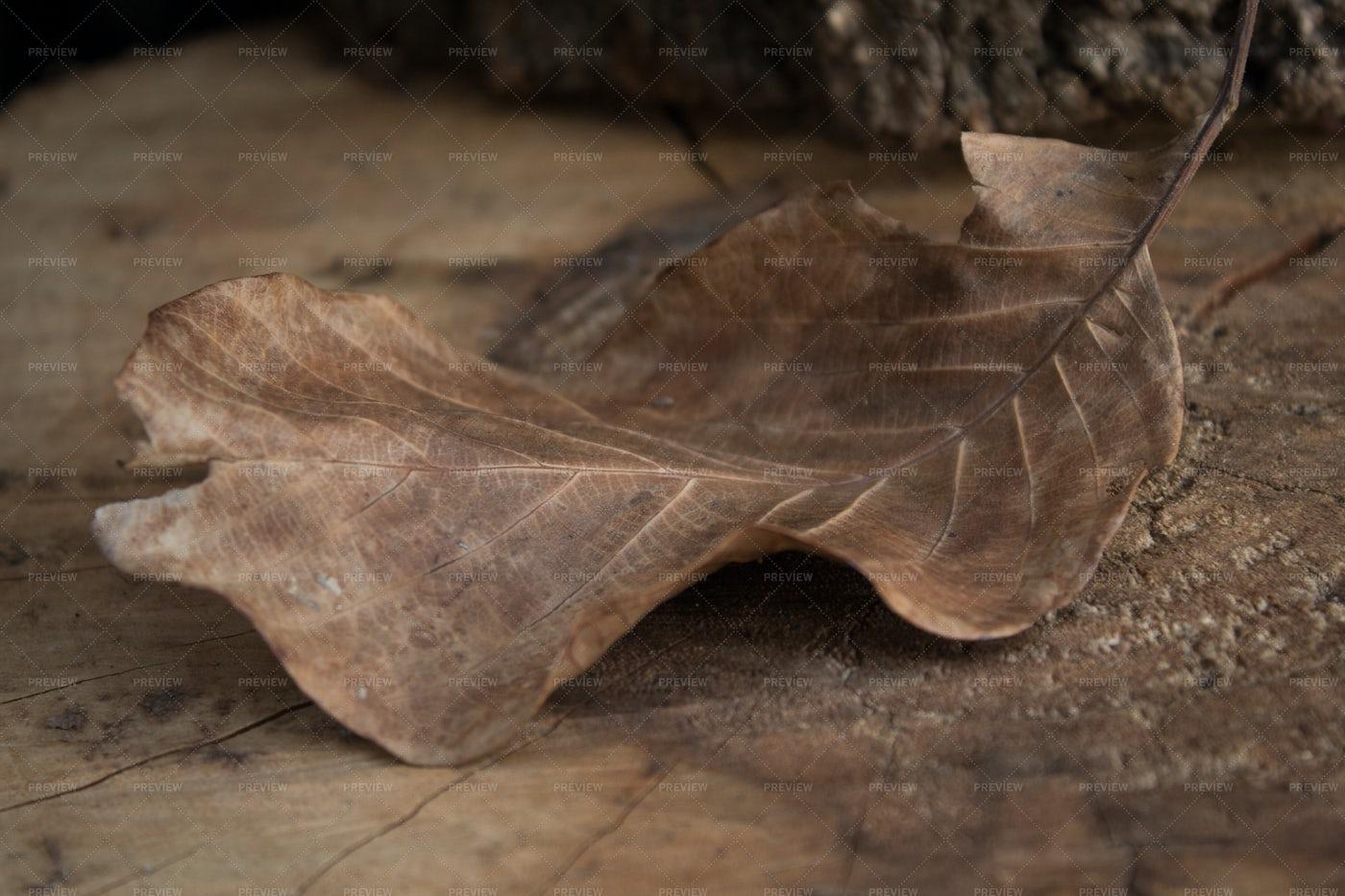Autumn Leaf On Stump: Stock Photos