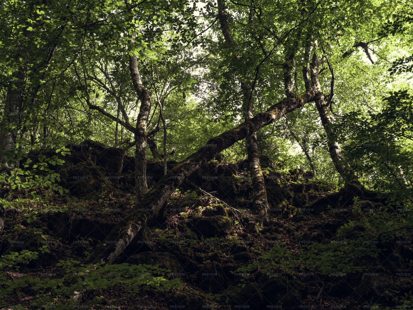 Fallen Tree In A Forest: Stock Photos