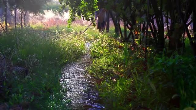 Gardener By The Creek: Stock Video