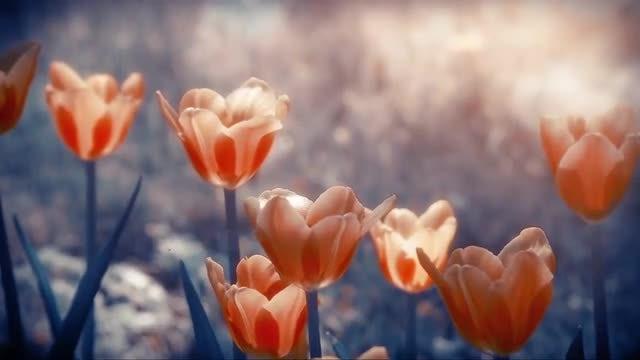 Summer Flowers: Stock Video