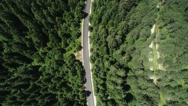 The Bikers' Drive Through The Woods: Stock Video