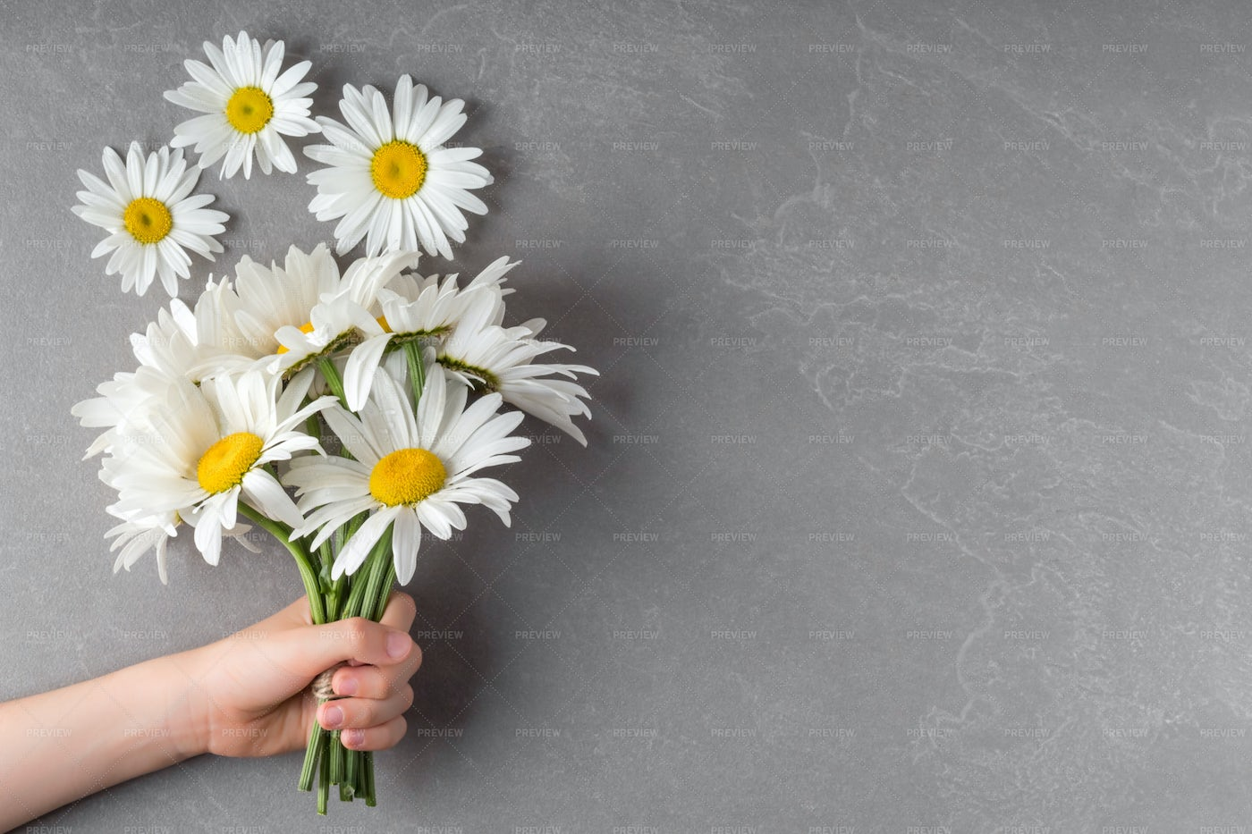 Child With Chamomile Flowers: Stock Photos