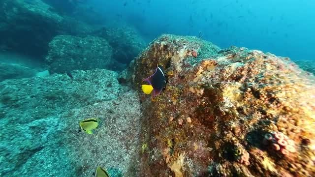 POV Shot Of Ocean Floor: Stock Video