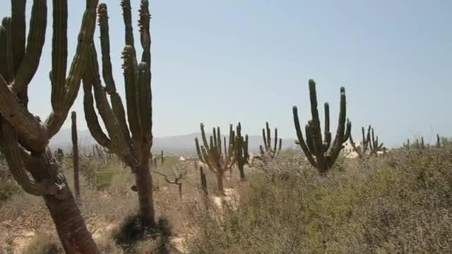 Panning Shot Of A Desert: Stock Video