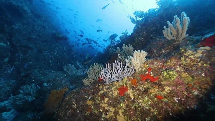 Ocean Floor: Stock Video