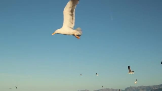 Seagulls Flying By: Stock Video
