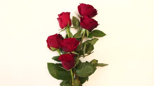 Bouquet Of Red Roses : Stock Video