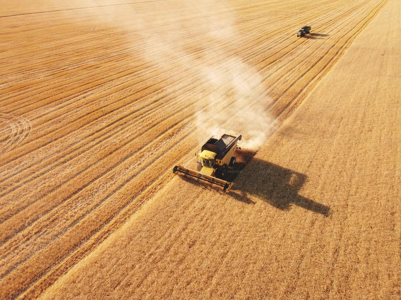 Wheat Field Harvester: Stock Photos