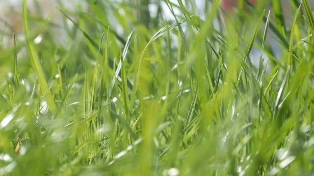 Green Grass On Sunny Day: Stock Video
