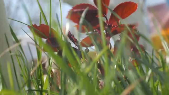 Green Grass And Flowers : Stock Video
