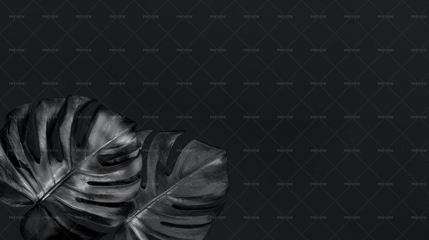 Black Minimal Background With Monstera.: Stock Photos