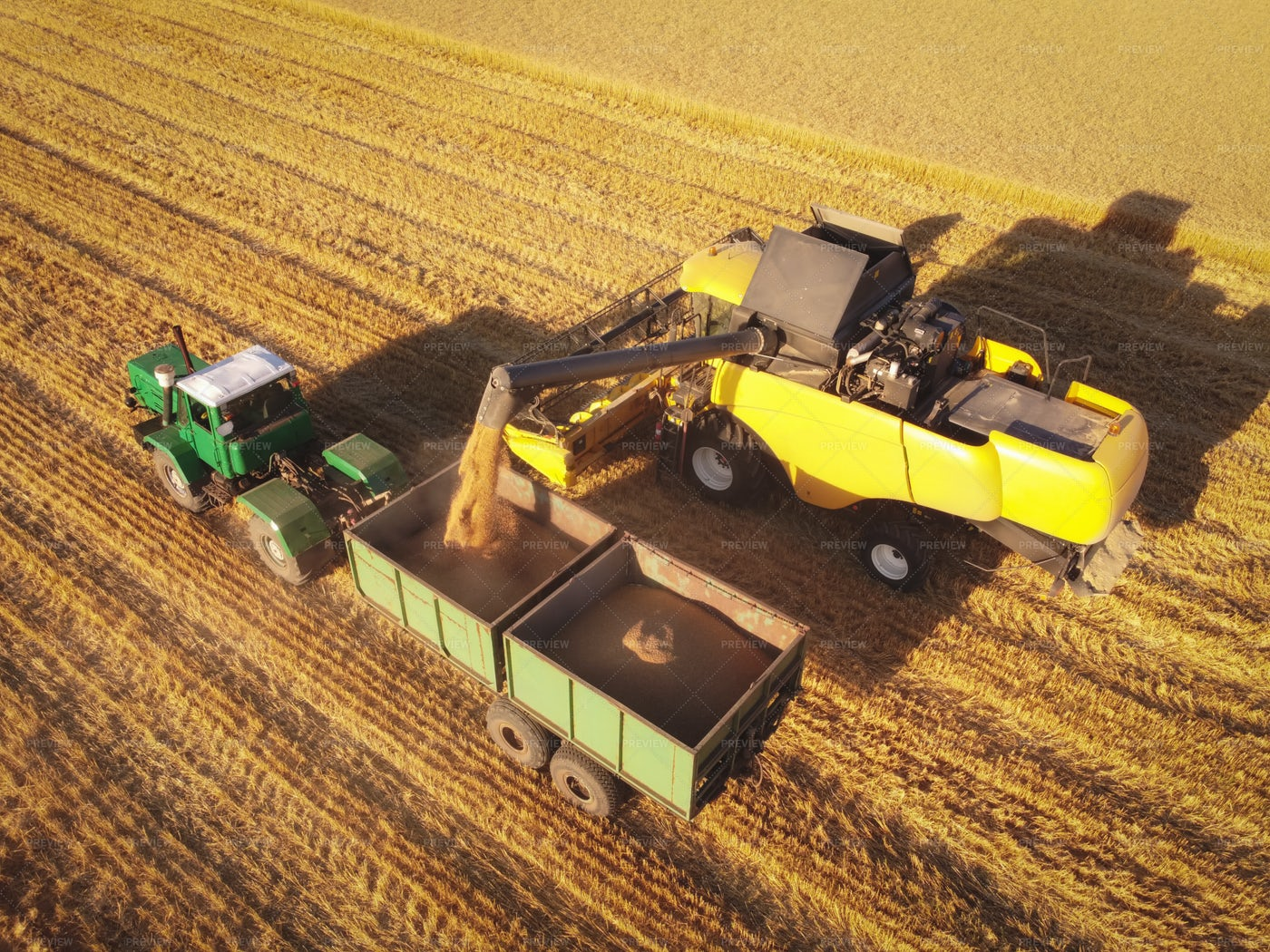 Wheat Seeds Loading In Trailer: Stock Photos