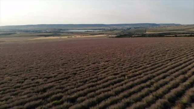 Aerial Shot Over A Field: Stock Video