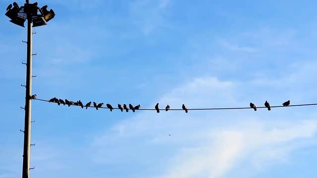 Birds Resting On Utility Cable: Stock Video