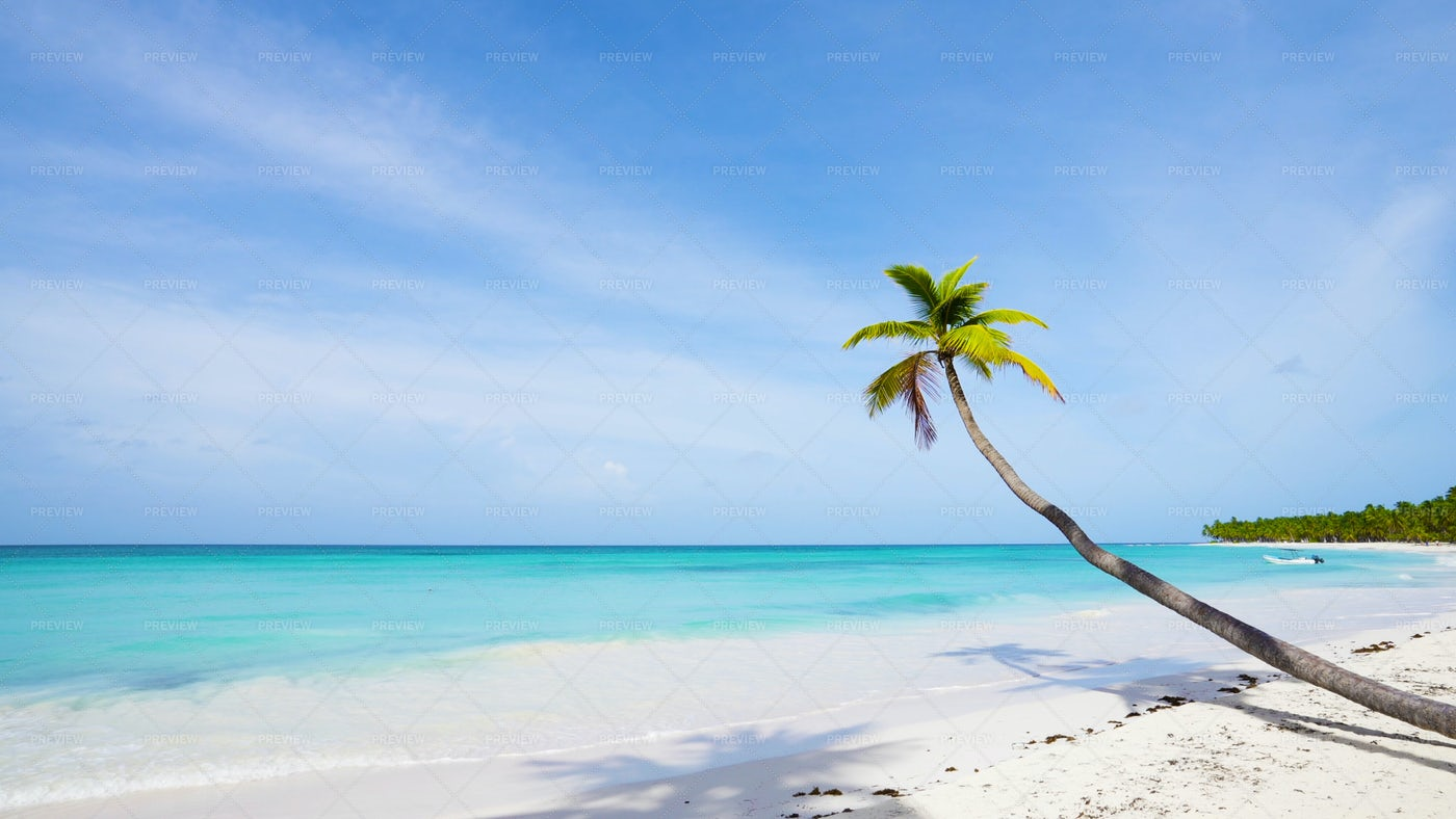 Lonely Palm Above The Sea: Stock Photos