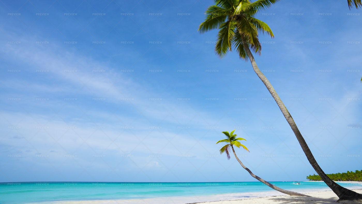 Palm Trees On Sunny Beach: Stock Photos