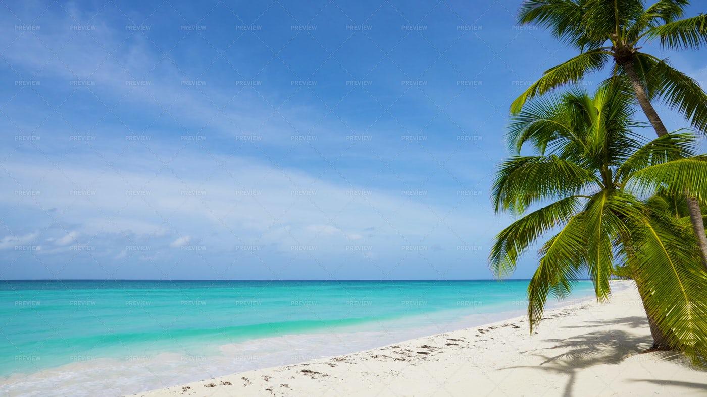 Beautiful Palm Beach Landscape: Stock Photos