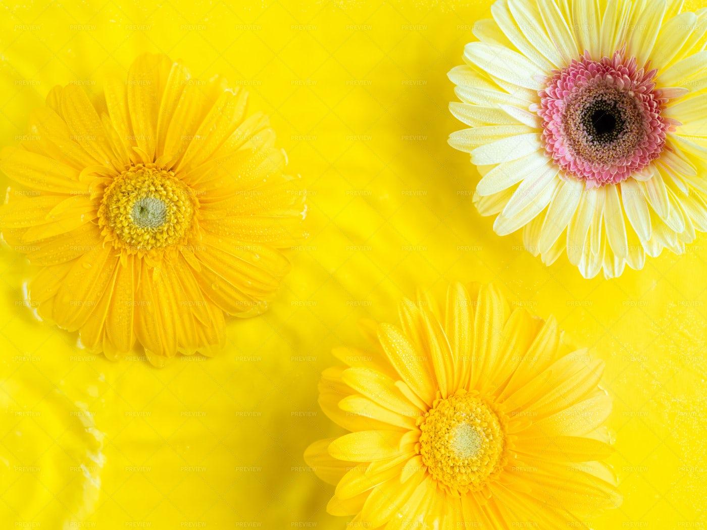 Yellow Beautiful Gerbera Daisies: Stock Photos